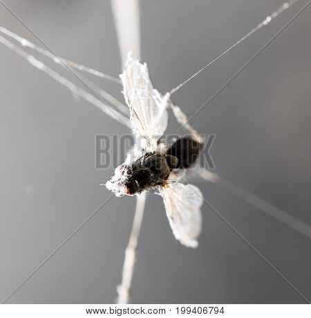 a fly in the web . A photo