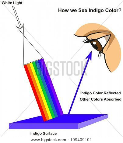 How we See Indigo Color infographic diagram showing visible spectrum light on surface and colors reflected or absorbed according to its color for physics science education