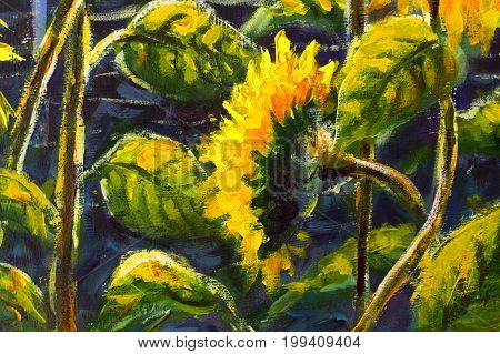 sunflowers. Original oil painting of sunflower flowers. beautiful sunflowers flowers on canvas. Modern Impressionism.