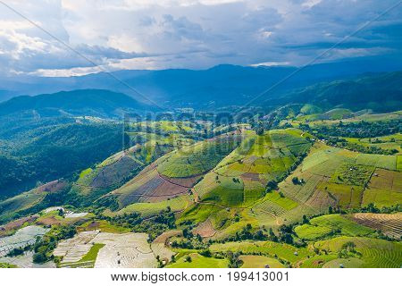 Aerial top view photo from flying drone of green rice fields in countryside Land with grown plants of paddy and sea of fog at Pa Pong Piang Thailand.