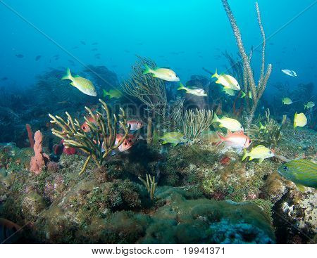 Fish on a Reef