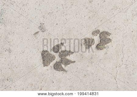 Dog tracks in the congealed asphalt street