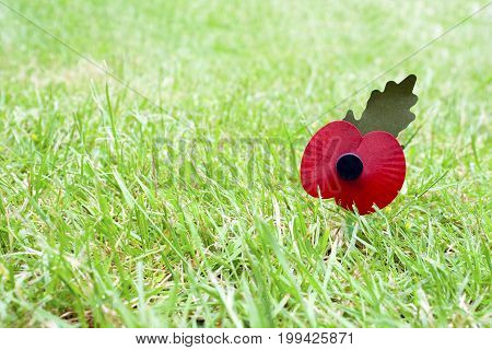 Remembrance day poppy laying in grass with a shallow depth of field and copyspace