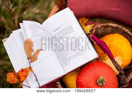 an open book in beautiful colorful autumn outdoors decoration