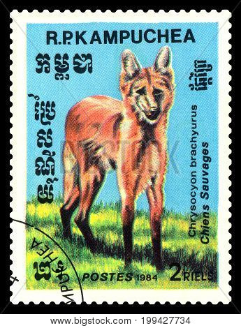 STAVROPOL RUSSIA - August 08 2017 : A Postage Stamp Printed in the Cambodia Shows Maned wolf (Chrysocyon brachyurus) circa 1984