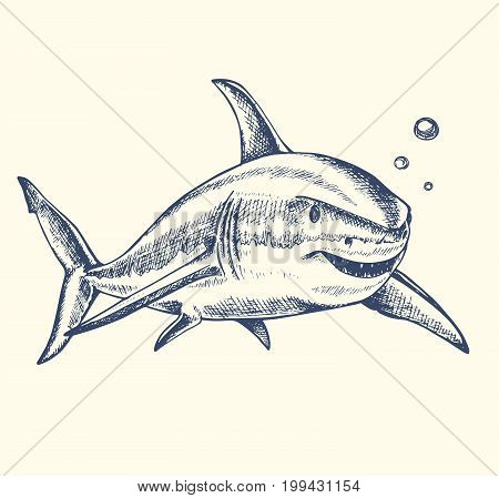 Hand drawn vector toothy shark swimming in the water