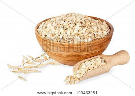 oat flakes in bowl and ripe oat ears isolated on white background with clipping path. Uncooked oatmeal