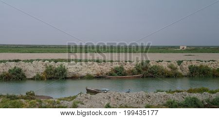 Mesopotamian Marshes habitat of Marsh Arabs aka Madans near Basra Iraq