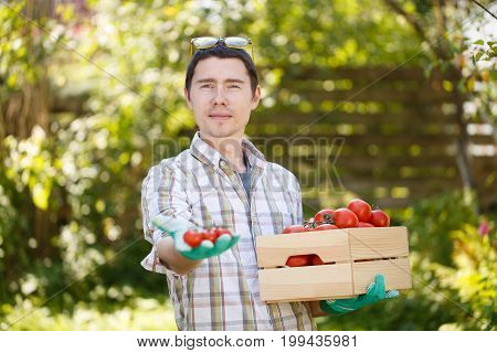 Young agronomist with box of tomato on blurred background