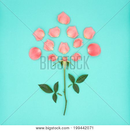 Top view (Flat-Lay) image of pink beautiful rose flower dismantling on green background Pastel colors. Valentine day love and wedding concept.