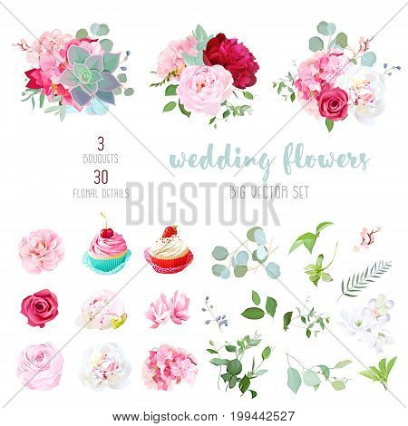 Blooming white and burgundy red peony, pink hydrangea, camellia, rose, succulents, cute cupcakes and decorative plants big vector collection. Wedding party set. All elements are isolated and editable.