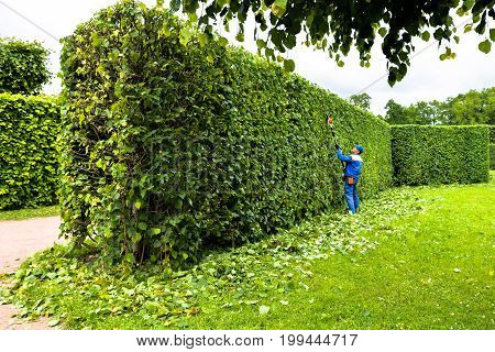 Man trimming trees in the park. Professional gardener in a uniform cuts bushes with clippers. Pruning garden, hedge. Worker trimming and landscaping green bushes. Hard work in the garden. Clipper.