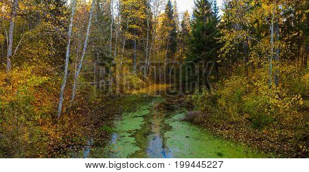 Trees with autumn leaves above the water covered by duckweed. Quiet park, sunny fall time.