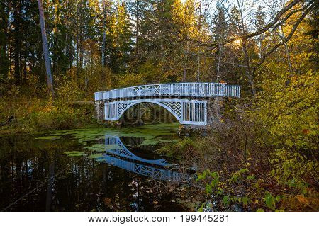 White wooden bridge over small river. Trees with autumn leaves above the water covered by duckweed. Quiet park, sunny fall time.