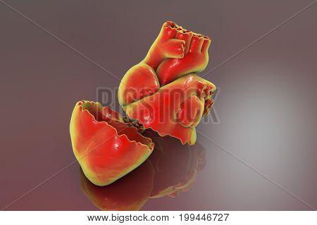 Realistic broken heart, separation and divorce concept, 3D illustration