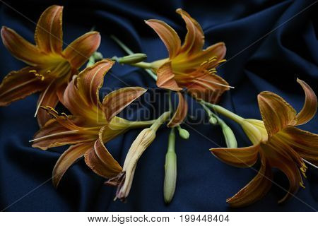orange lilies on a black background , bouquet of lilies