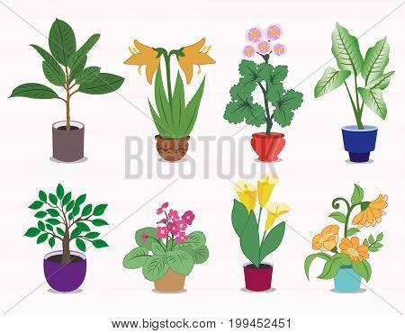 Set of colorful house plants in pots. Flowerpot isolated objects, houseplant collection. Graphic vector illustration.