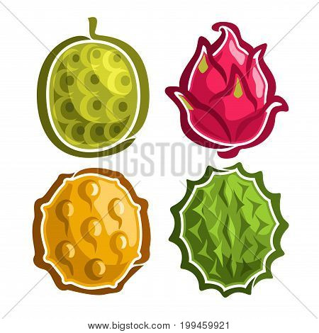 Vector Set icons of colorful exotic Fruits: 4 primitive logo of thai fruit isolated on white, set of cartoon simple stickers for juice or candy, labels for jackfruit dragon fruit, kiwano, and durian.