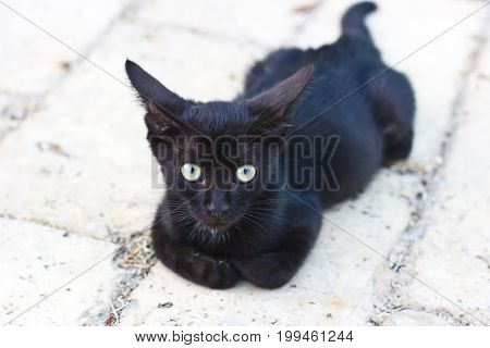 Black laying cat on the white ground