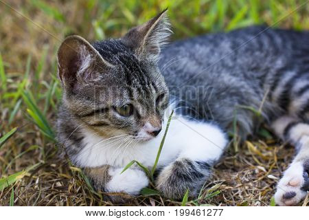 Kitten on the green grass, laying cat