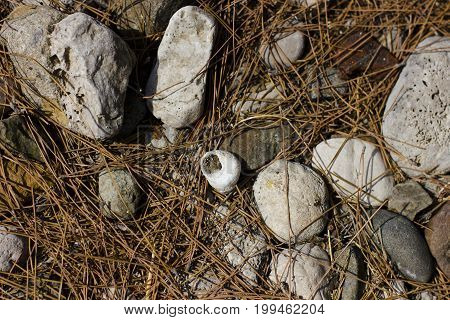 White sea snail on the grey rock