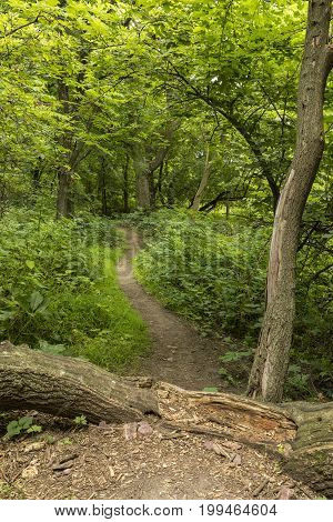 Summer Hiking Trail - A hiking trail in the woods.