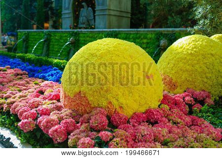 Las Vegas, Nv - June 13, 2017: Topiary Lemons Among Colorful Blooming Plants