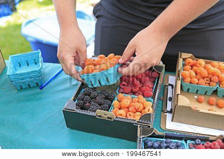 Organically Grown Raspberries, Blackberries And Blueberries For Sale At The Downtown Farmers' Market