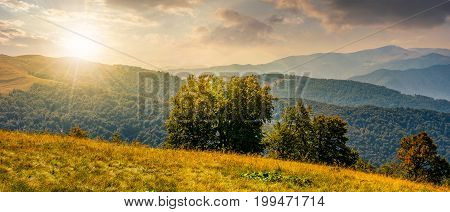 beautiful panorama of Carpathian mountains in early autumn weather. few beech tree tops behind the grassy of a ridge under sky with clouds at sunset