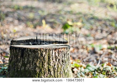 Fall season stump on blurred background with copy space.