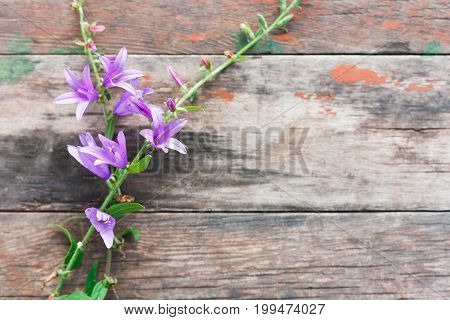 Fall season background, bellflower on rustic wood background with copy space.