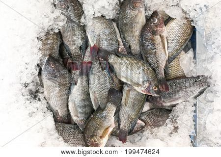 Black Tilapia Snapper Fish On Ice For Sale In Market