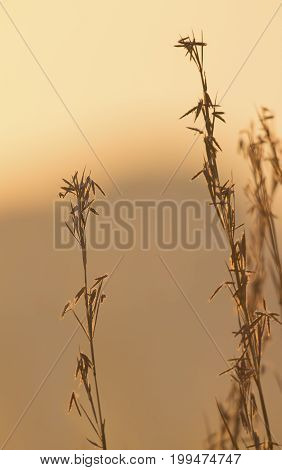 Delicate wild grass backlit in the early morning sun with bokeh reflections