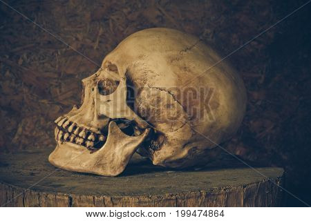Still Life with a Skull concept on the art.