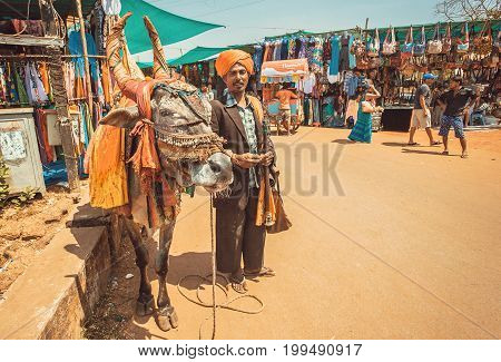 GOA, INDIA - MAR 1, 2017: Poor asian musician with flute playing songs for money and cow food on traditional market street on March 1, 2017. Near 5 million tourists visit Goa annually