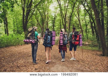 Rear View Of Four Tourists Walking In The Forest, Holding Map, Trying To Find The Way, Disscus It, A