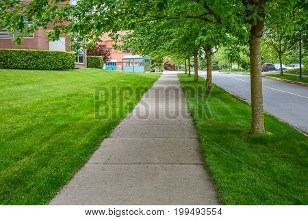 Beautiful walkway under the trees along the road