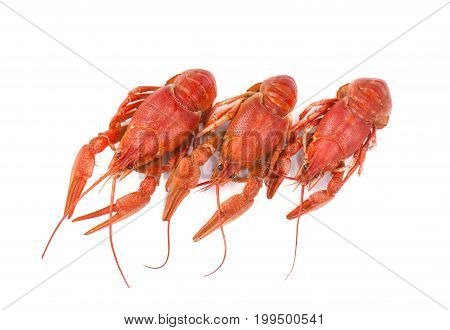 Photo of three boiled crayfish on a white background