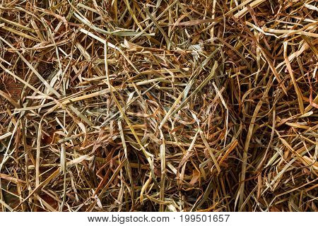 Dry straw and hay on wooden table closeup. Rural background and dry grass texture