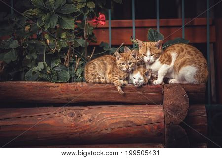 Cute red cats family together with kitten resting on wooden logs in rural countryside village in vintage rustic style