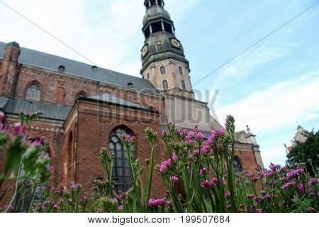 Riga Litva July 31 2017 St. Peter's Church.View through flowers. Focus on flowers