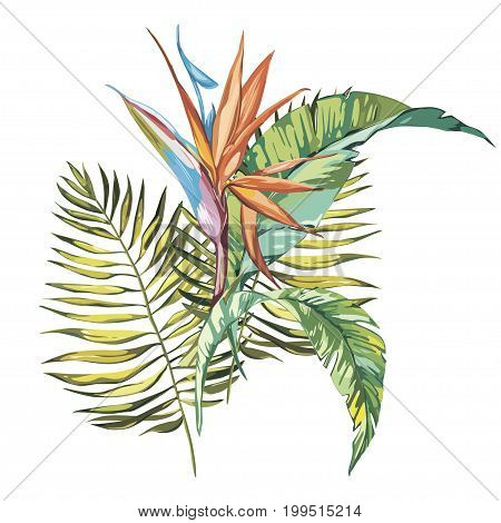 Tropical flowers Strelitzia isolated on white background.