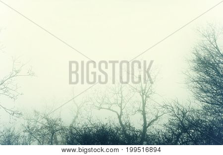 Artistic image of a mysterious bare forest with fog