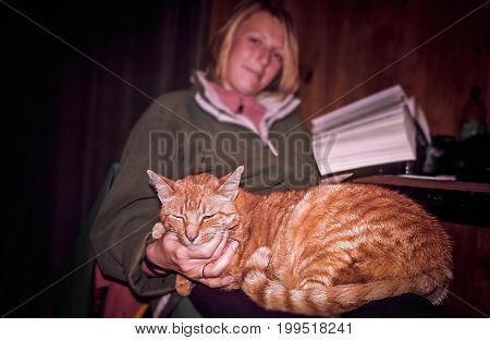 Cute cat sitting on womans knees while she is reading a book
