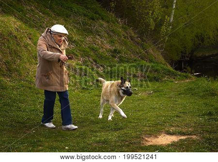Moscow, Russia, May 13, 2017: Unidentified senior pensioner old woman with dog walk in city park on spring sunny day in Russia, Moscow, May  13, 2017.
