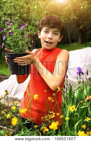 teenager boy help in garden with pot pansy plants among summer green plants and flowers