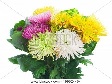 Chrisantemum fresh fall flowers bouquet isolated on white background