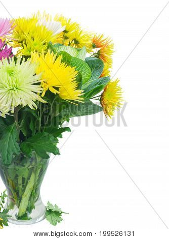 Chrisantemum fresh fall flowers bouquet in vase close up isolated on white background