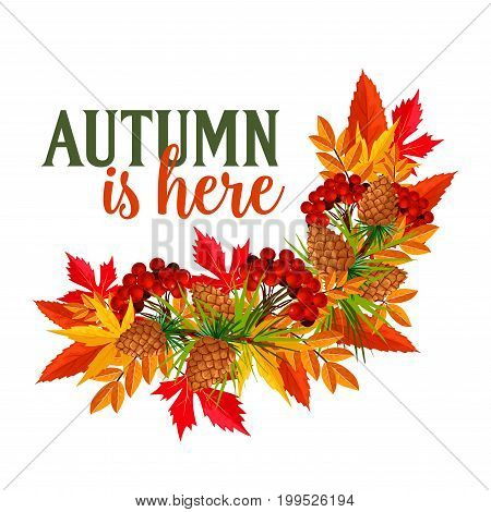 Autumn is here quote and foliage wreath of maple, birch or rowan berry harvest, oak acorn or elm and aspen tree leaf. Vector pine or fir cone design for seasonal autumn greeting card or holiday poster