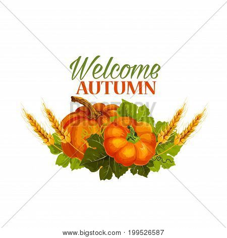 Welcome Autumn seasonal greeting card of pumpkin, rye and wheat grain harvest on foliage. Vector isolated pumpkin vegetable leaf for autumn or fall season holiday design template